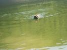Lotta zu Wasser_2